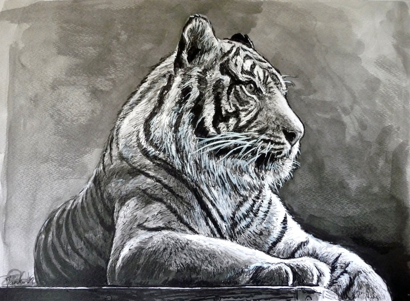 Line Drawing Of A Tiger S Face : Tiger pen drawing at getdrawings free for personal use