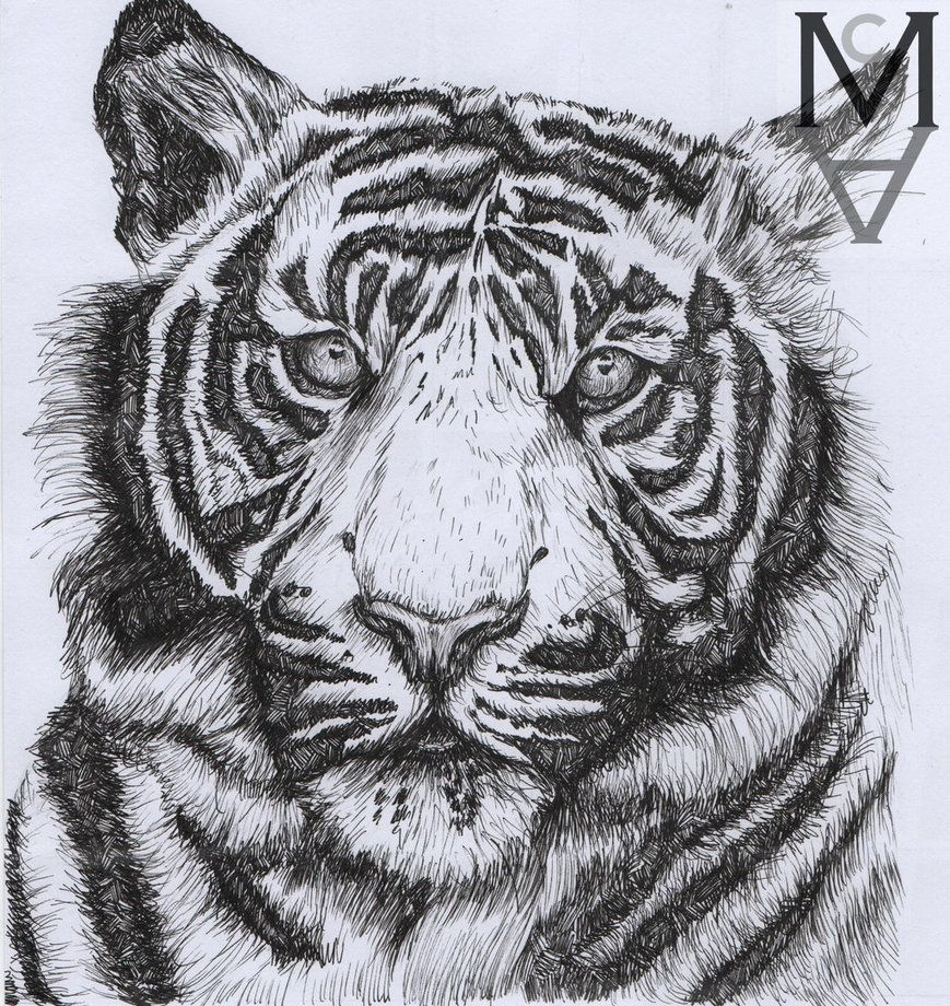 869x920 Tiger Drawn In Black Fine Liner Animal Artwork Pen Drawing