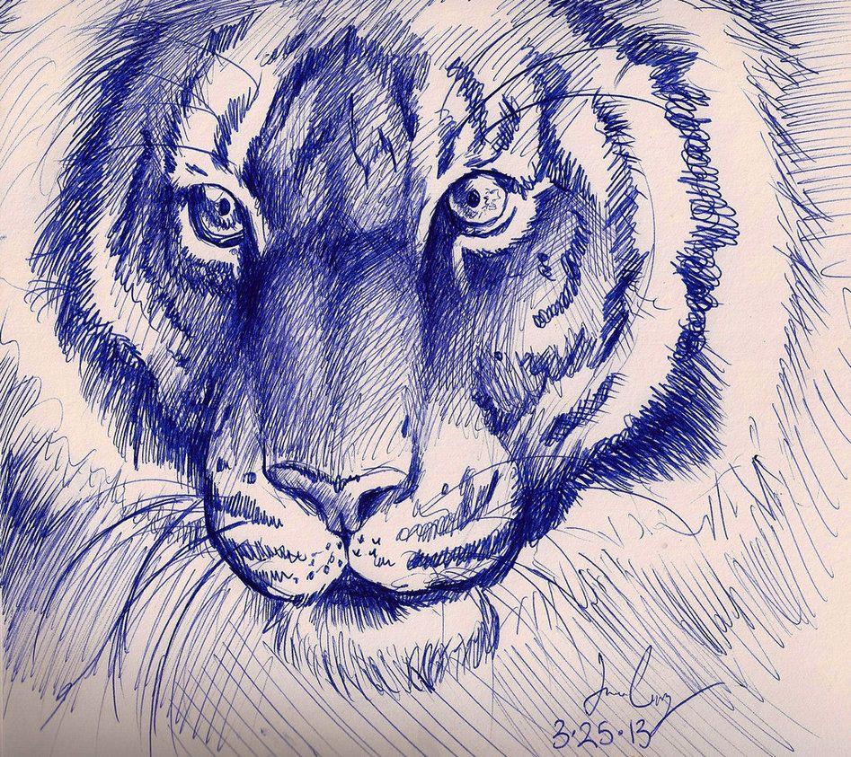947x843 Tiger Pen Sketch By Sketcher216 Inspiration Pen