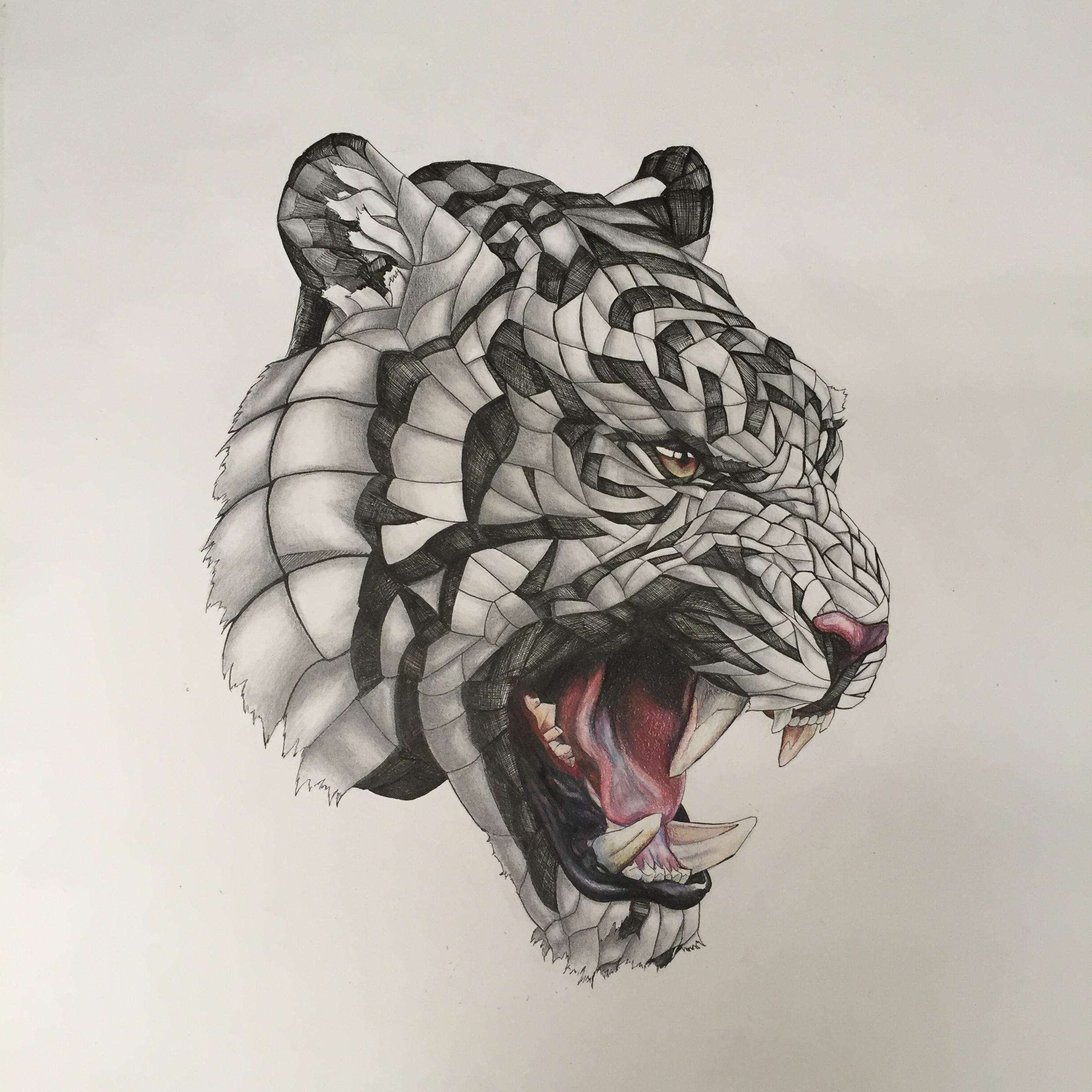 2448x2448 Wrapped Tiger, Pencilpencolour Pencil, 20x20 In.
