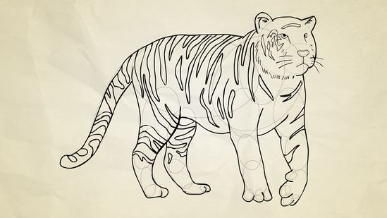 Line Drawing Of A Tiger S Face : Tiger pictures drawing at getdrawings free for personal use
