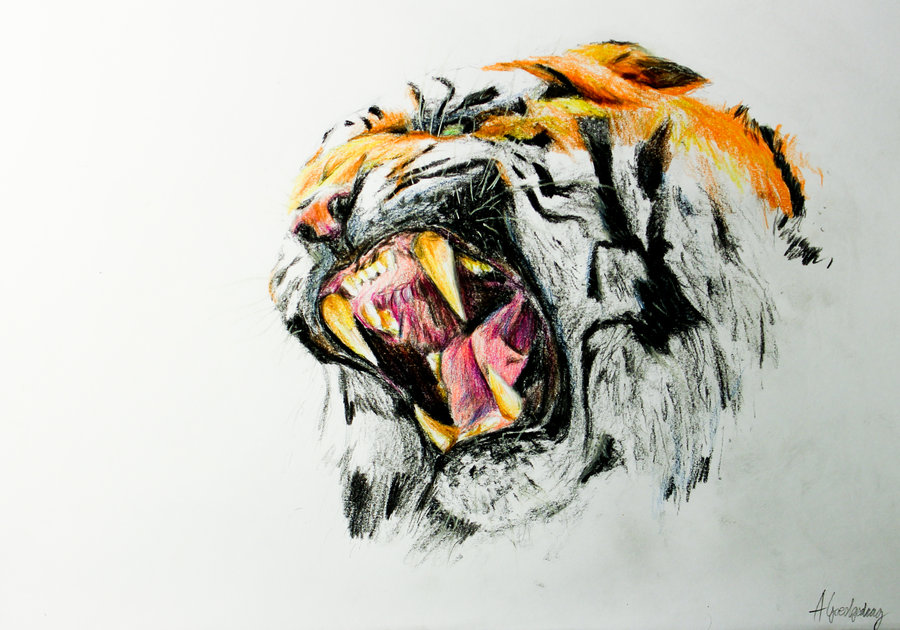 Line Drawing Of A Tiger S Face : Tiger roar drawing at getdrawings free for personal use
