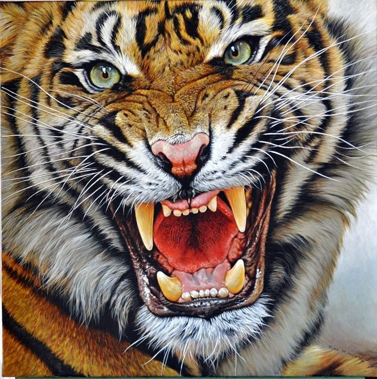 It is a picture of Superb Roaring Tiger Drawing