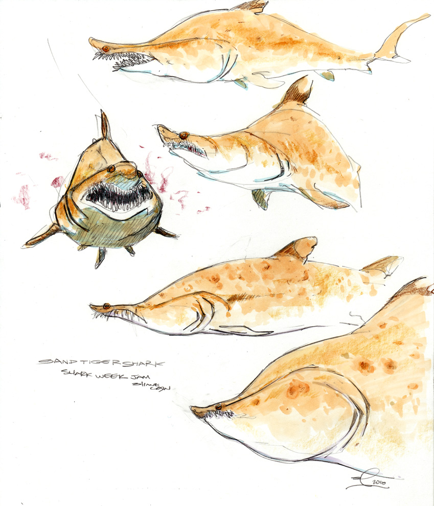 849x990 Piles And Piles Of Drawings Shark Week Sand Tiger Shark