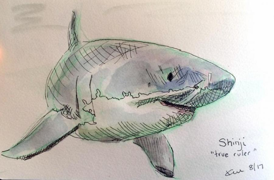 900x593 Shark Drawing. Nature. Drawings. Pictures. Drawings Ideas For Kids