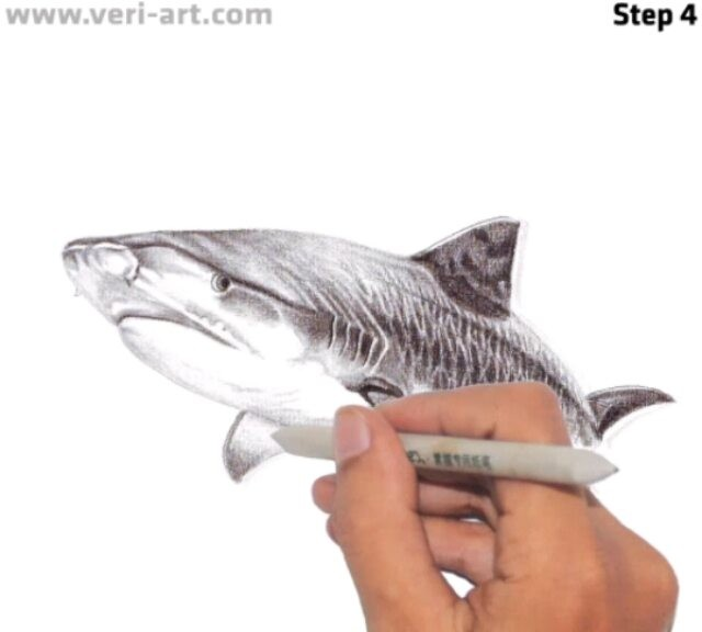 640x576 Tiger Shark' Ebook Amp Video Tutorial Drawings Www.veri