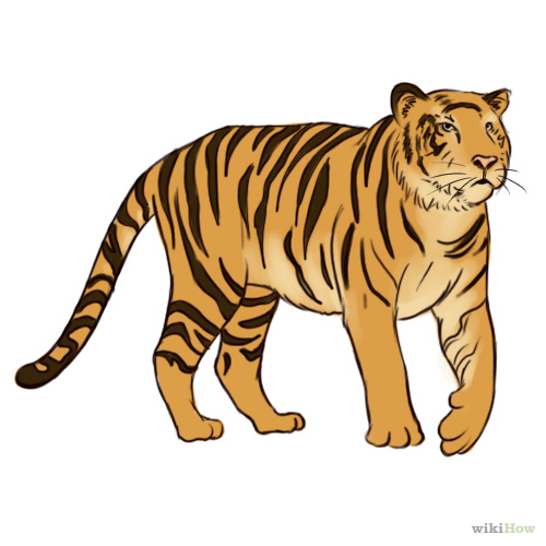 500x500 Draw A Tiger Tigers, Tiger Drawing And Sketches