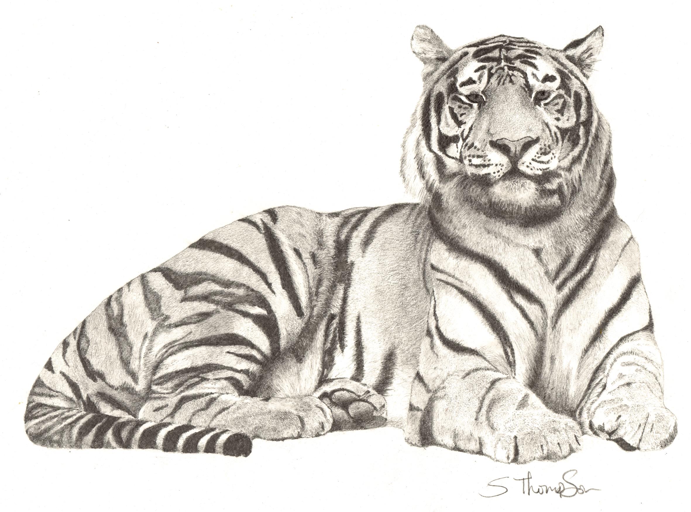 2362x1752 Pencil Drawing Of A Tiger Tattoos Drawings