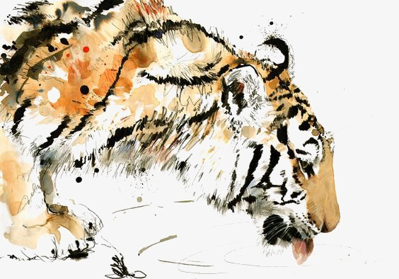 564x394 Tiger, Hand Painted Tiger, Drawing Tiger, Tigers Png Image