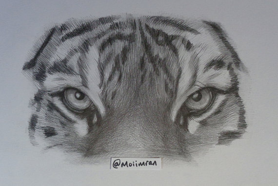 Line Drawing Of A Tiger S Face : Tigers eye drawing at getdrawings free for personal use