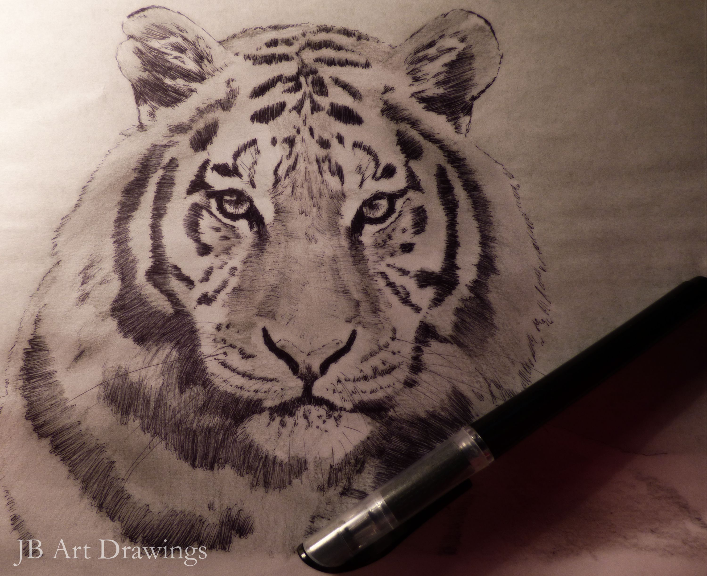 Line Drawing Of A Tiger S Face : Tigers face drawing at getdrawings free for personal use