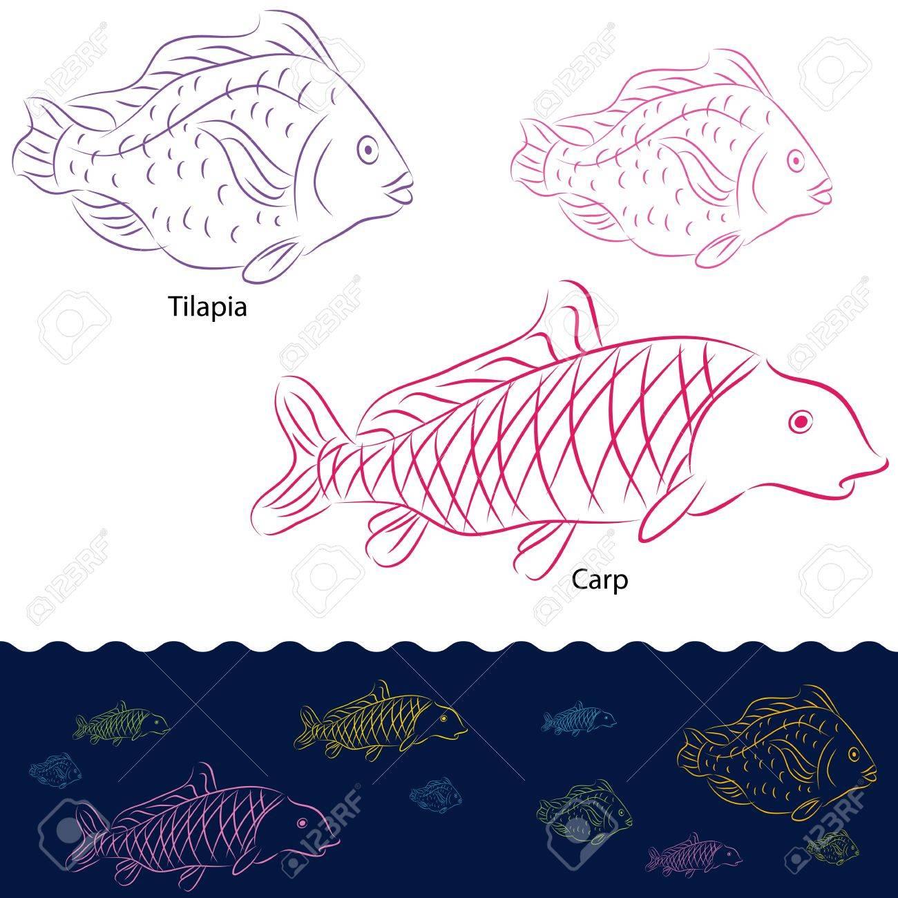 1300x1300 An Image Of A Tilapia And Carp Fish Set. Royalty Free Cliparts