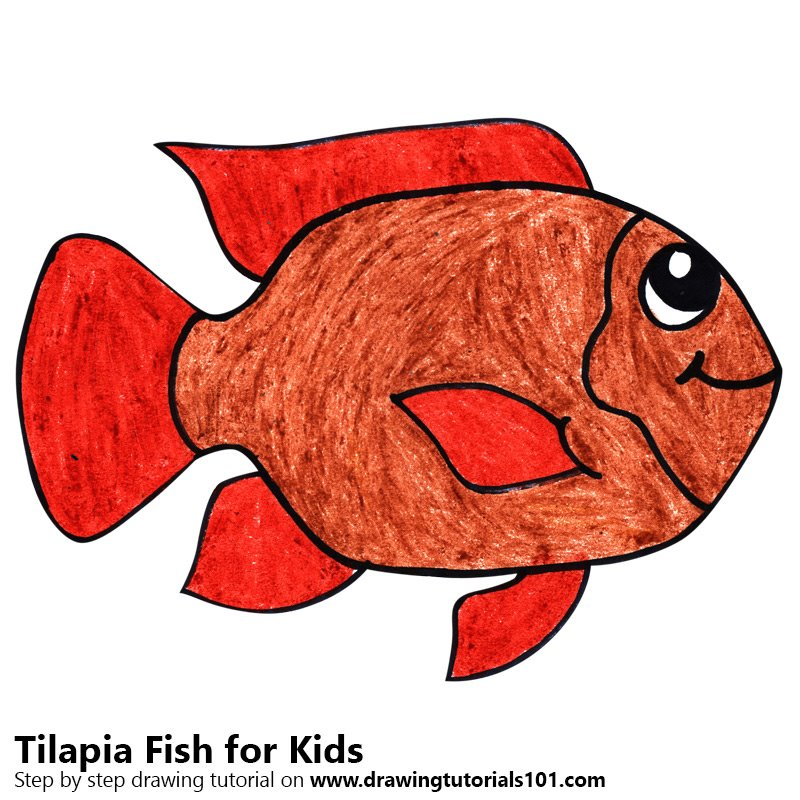 800x800 Learn How To Draw A Tilapia Fish For Kids (Animals For Kids) Step