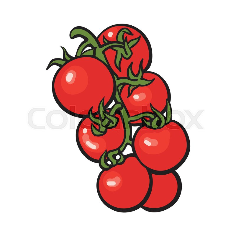 Tomato Drawing At Getdrawings Com Free For Personal Use
