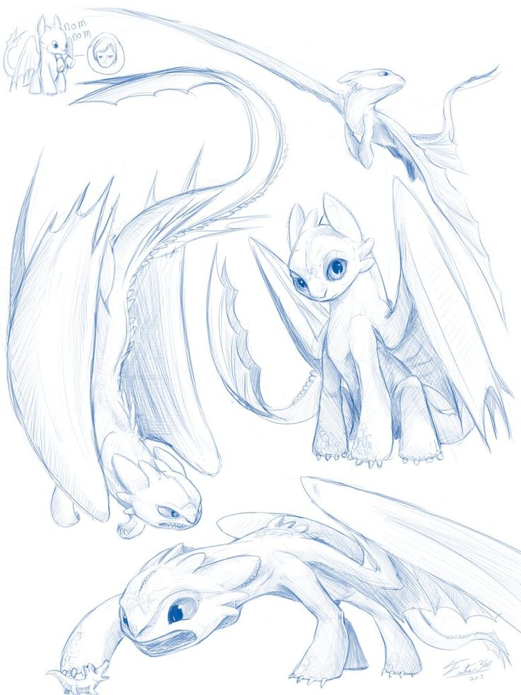 736x981 Toothless Sketches By Tsitra360 On How To Train
