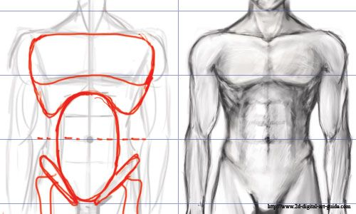 Torso Anatomy Drawing at GetDrawings.com | Free for personal use ...