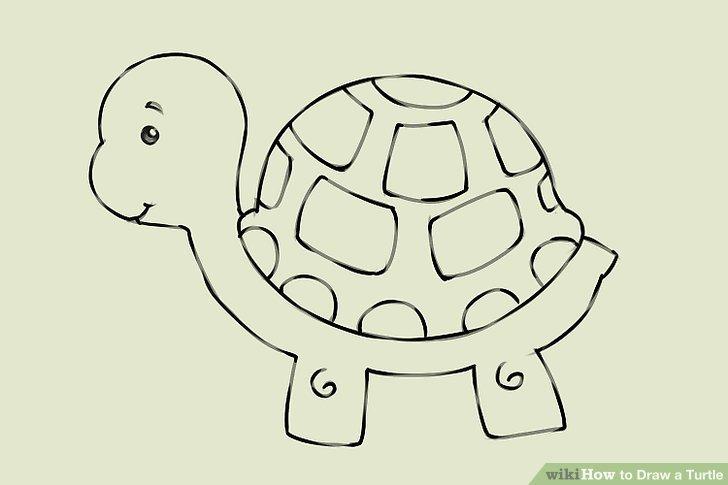 728x485 4 Ways To Draw A Turtle