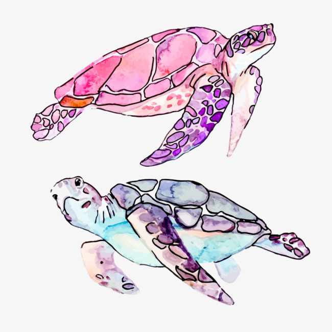 650x651 Drawing Turtle, Tortoise, Watercolor, Animal Png Image And Clipart