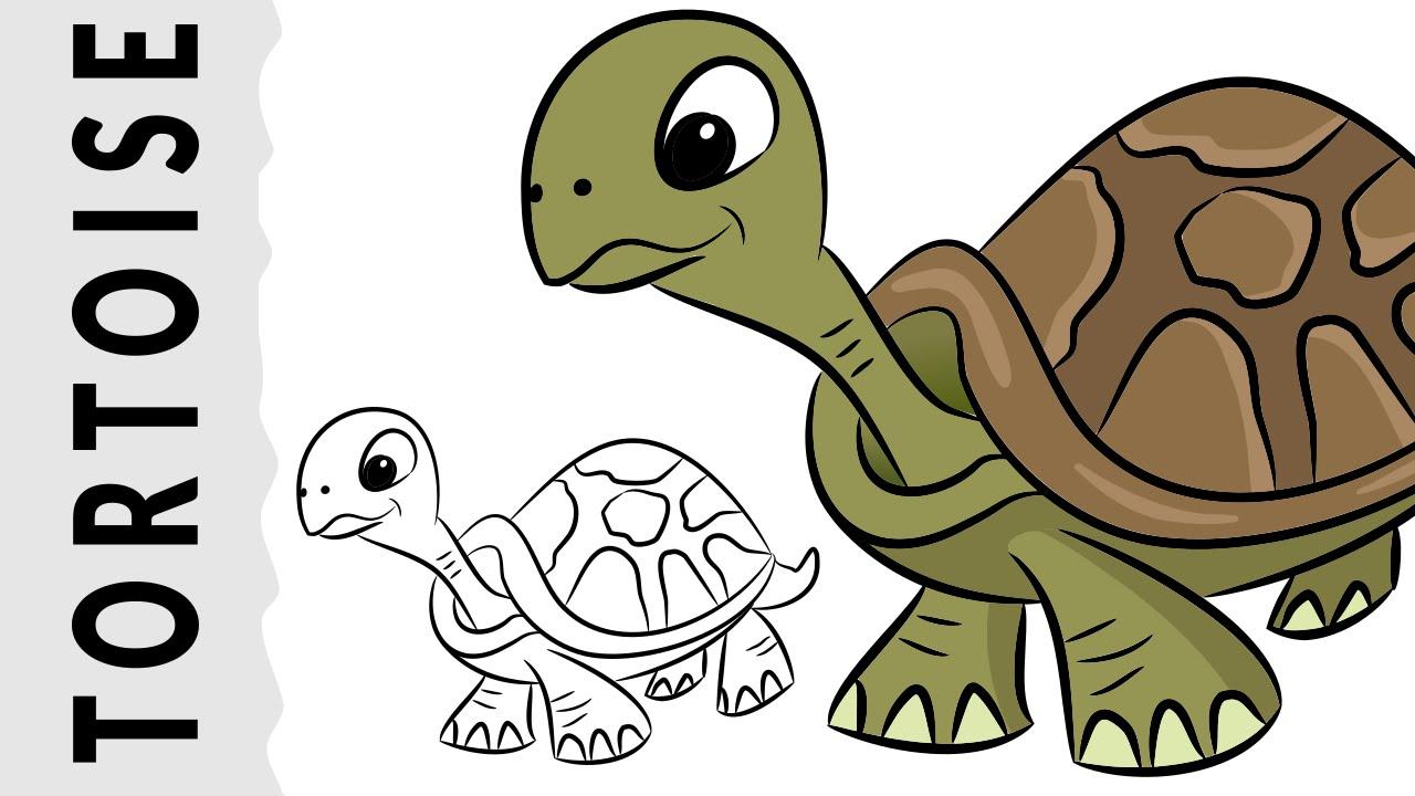1280x720 How To Draw A Tortoise Wie Zeichnet Man Eine