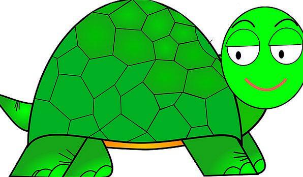 596x348 Turtle, Animation, Cute, Attractive, Cartoon, Funny, Happy