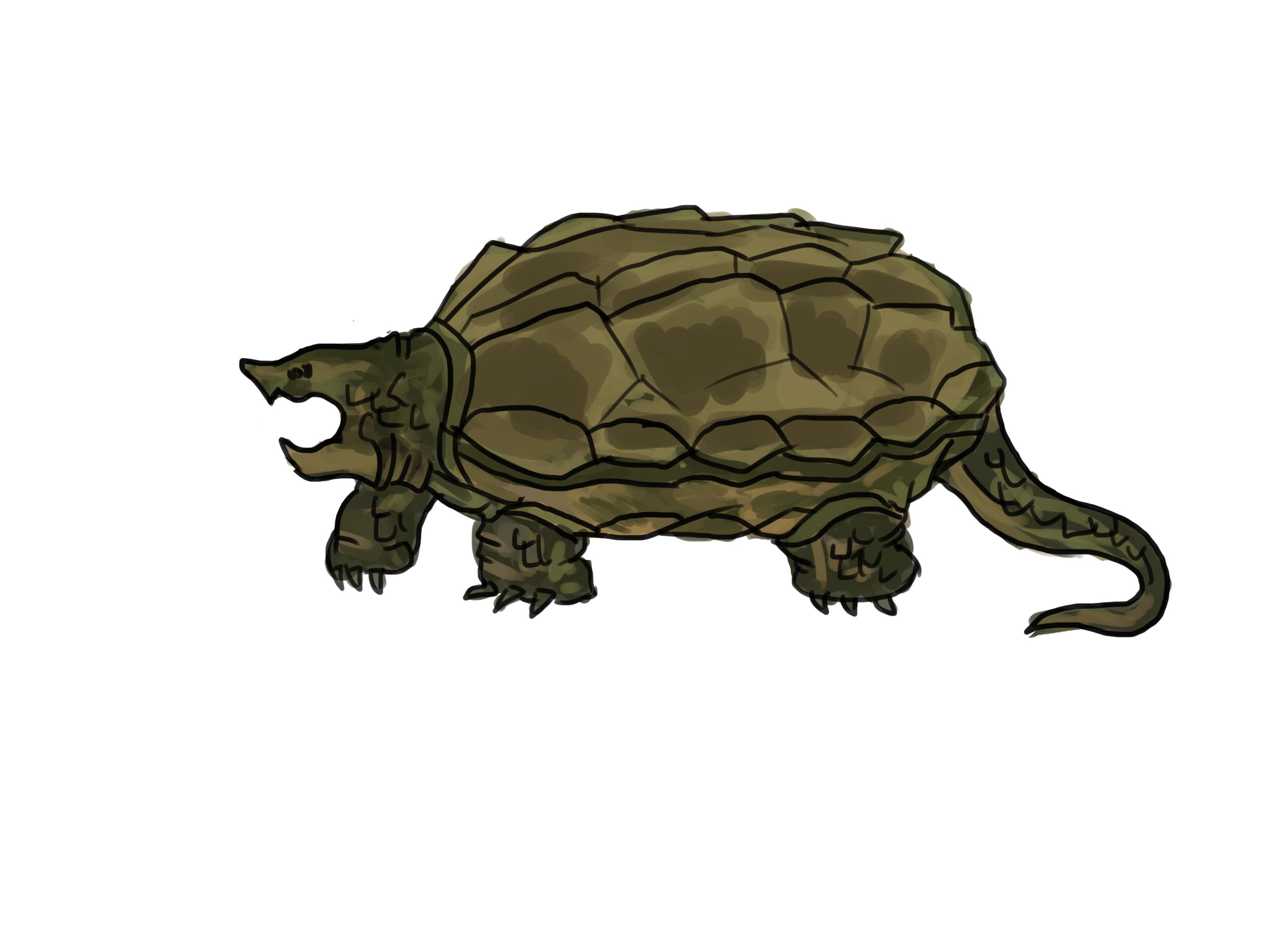 3200x2400 4 Ways To Draw A Turtle