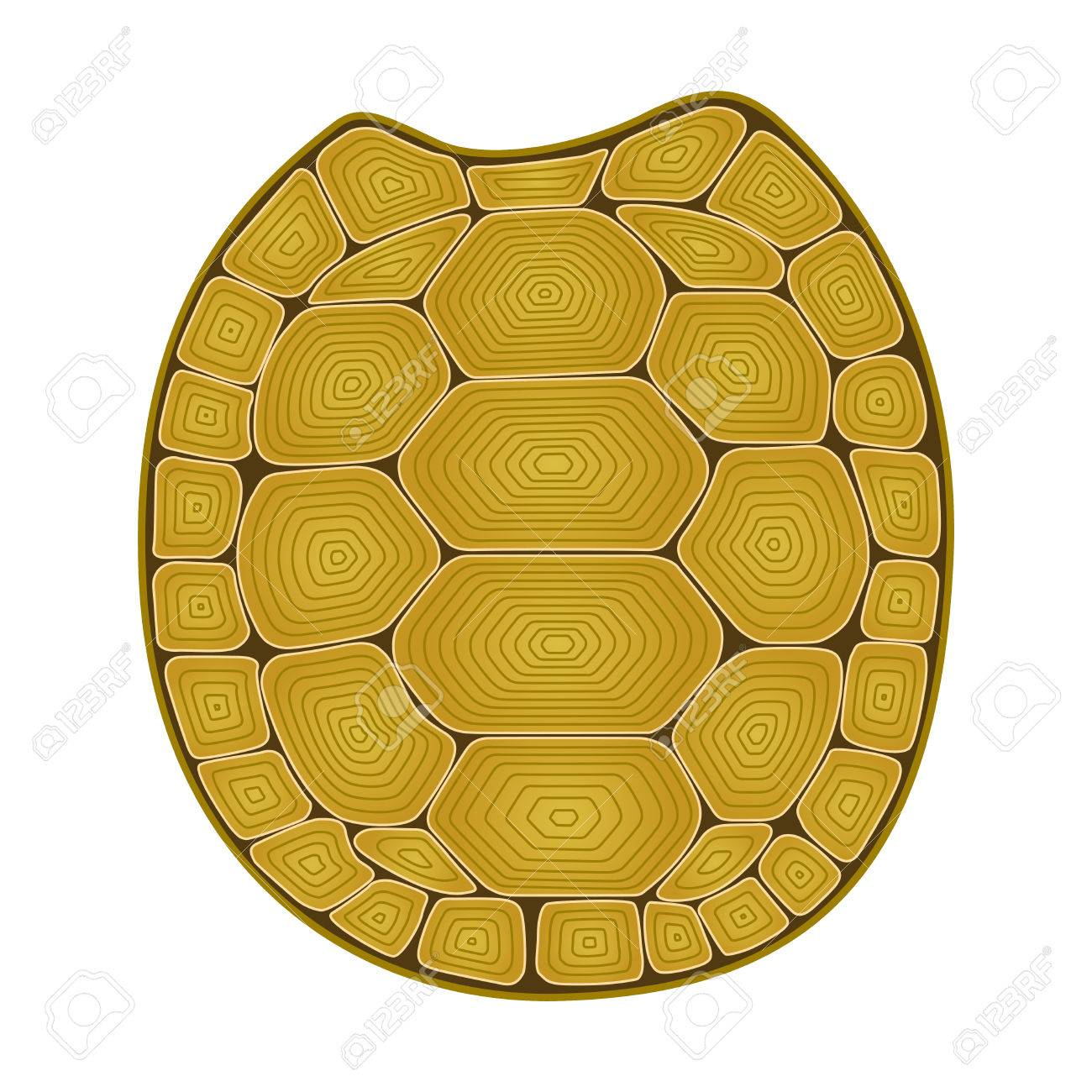 1300x1300 Carapace Turtle Zen Tangle. Coloring Book For Adult With Shell