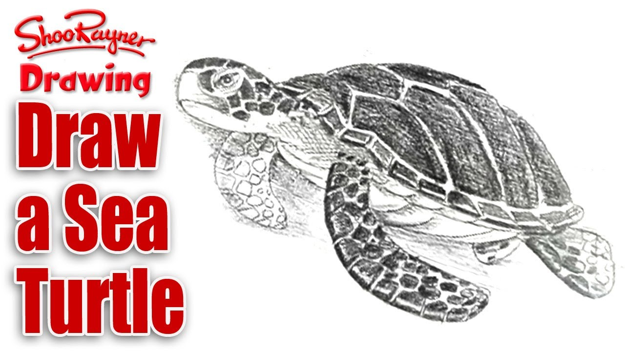1280x720 How To Draw A Sea Turtle