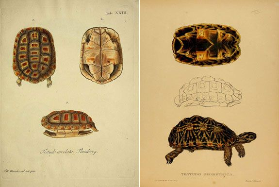 575x385 Scientific Illustrations Your Go To Guides For Halloween Costumes