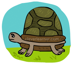 250x214 Step By Step Drawing Of A Tortoise