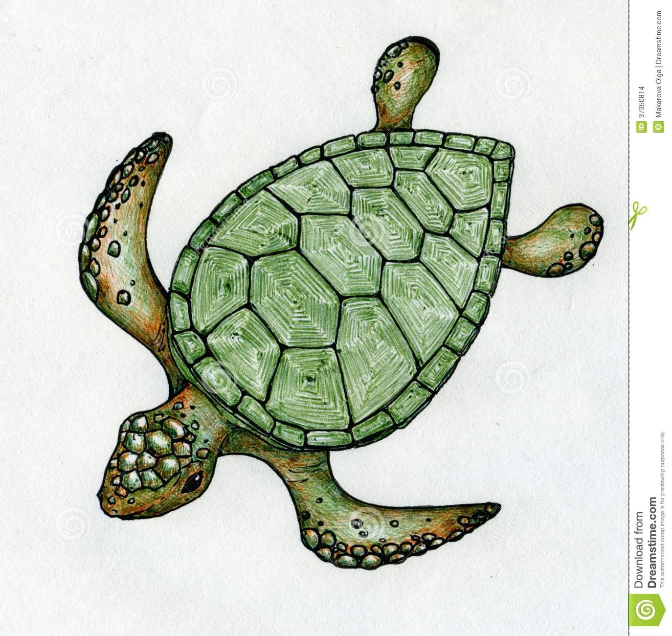 1374x1300 Turtle Shell Drawing Swimming Sea Turtle Stock Illustration. Image