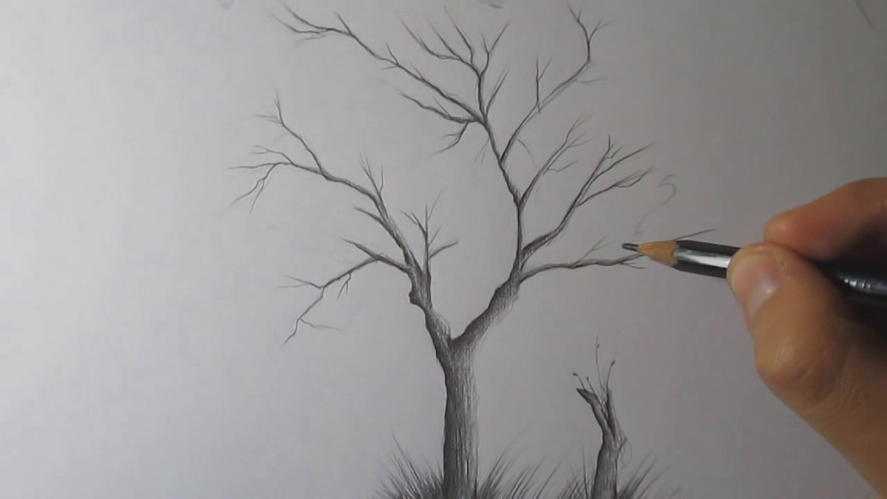 1280x720 How To Draw A Tree And Birds With Pencil Step By Step