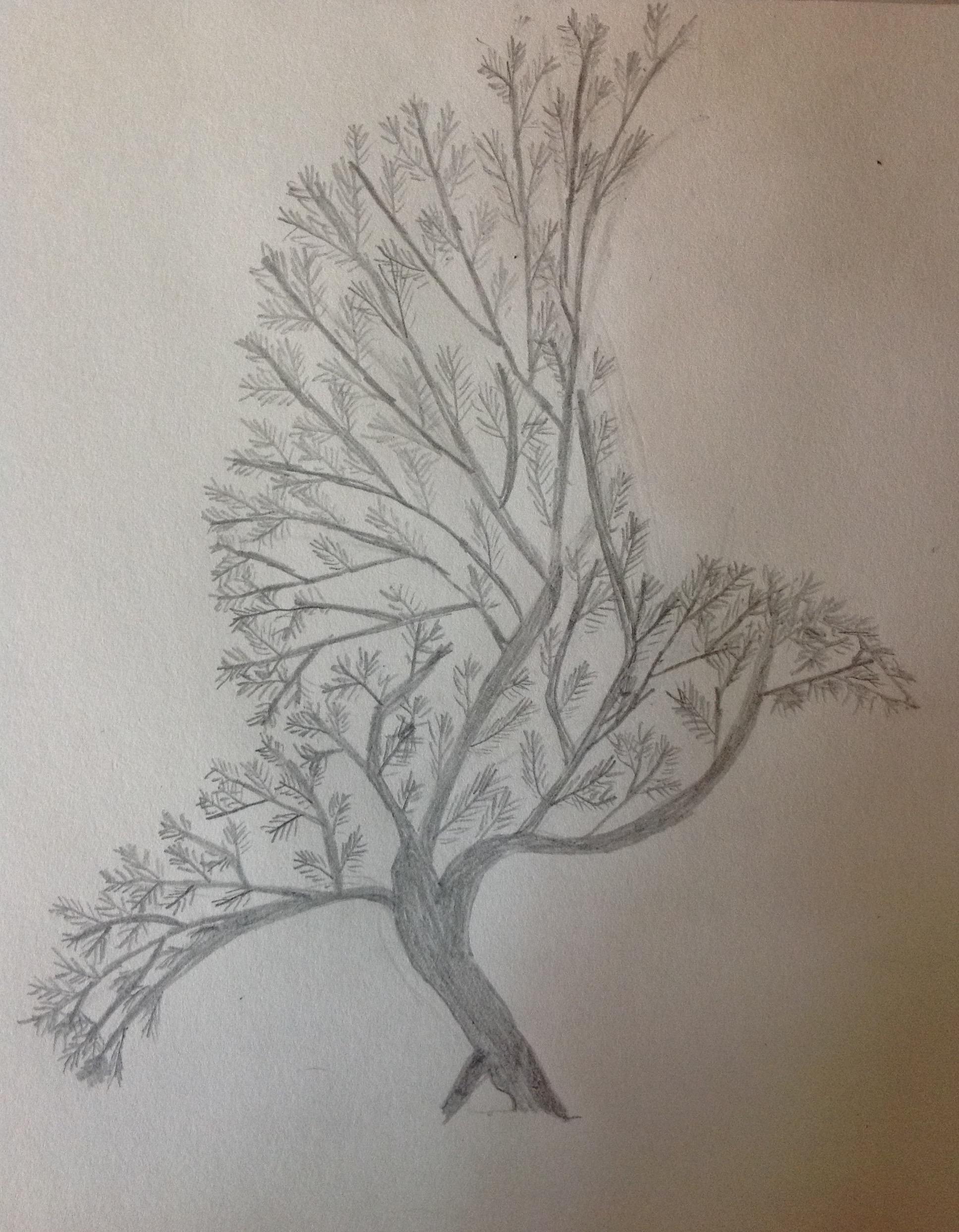 1935x2486 Tree Shaped As Bird Pencil Drawings Draw