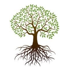 240x240 Oak Tree Drawing With Roots Simple Living Tree In The World Places
