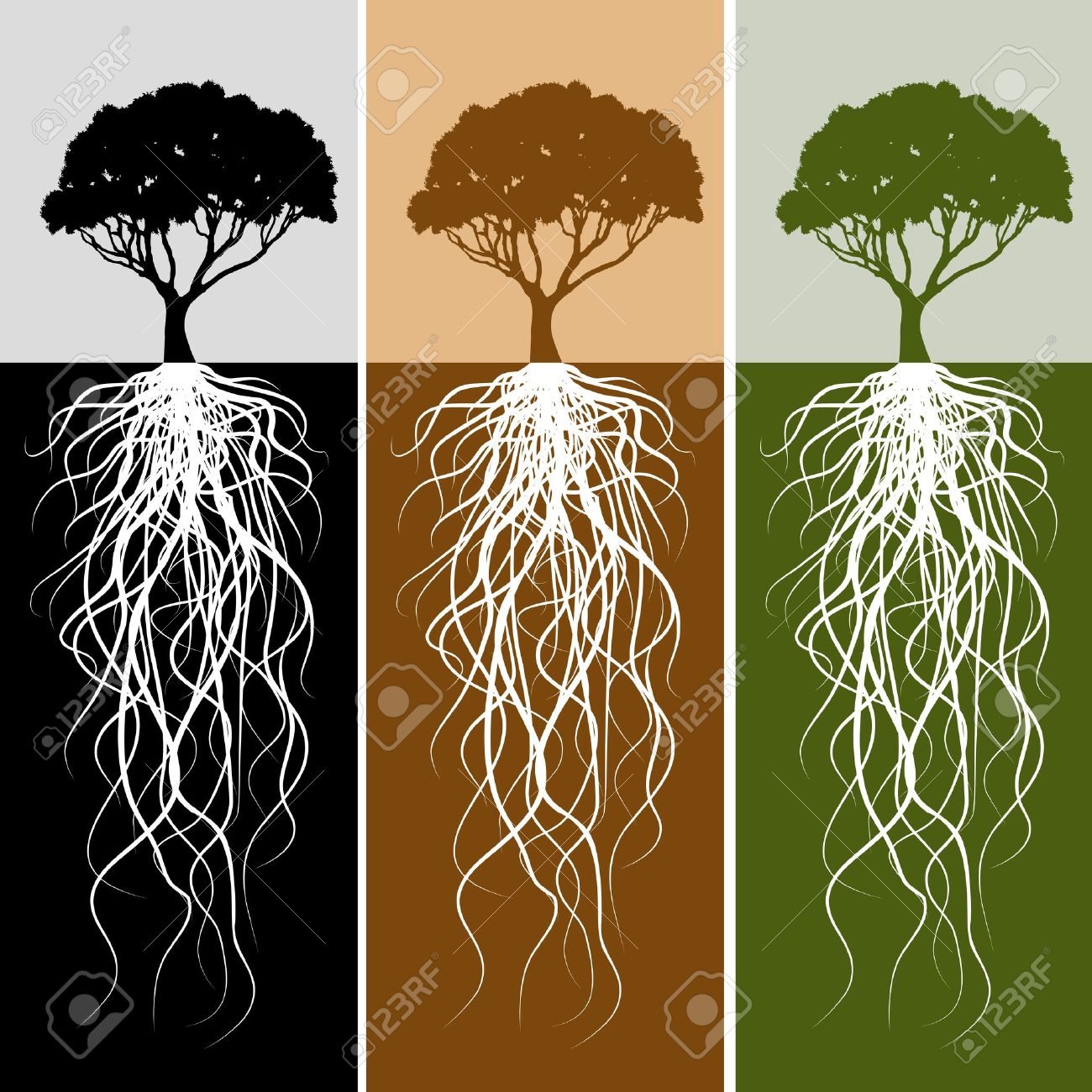 1300x1300 Tree Root Stock Photos, Pictures, Royalty Free Tree Root Images