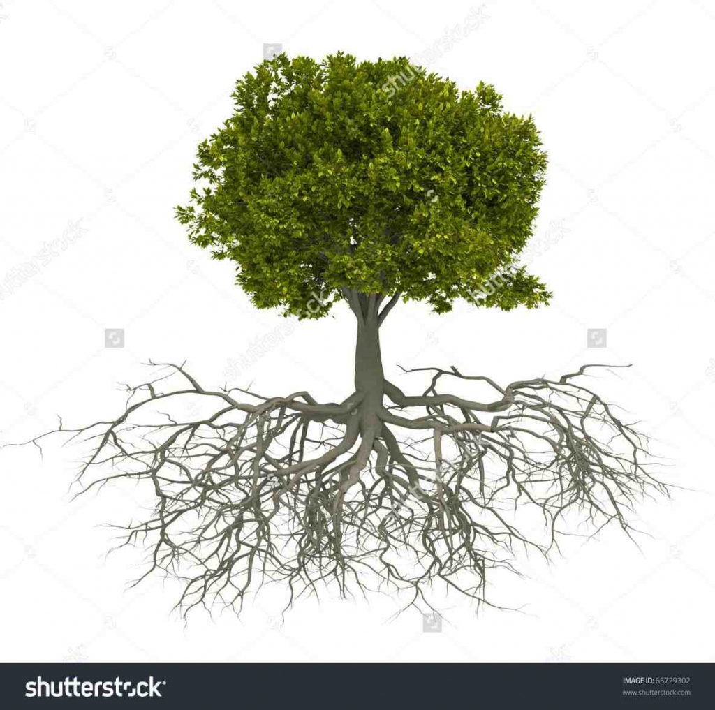 1024x1017 Tree With Roots Drawing Tree Roots Drawing Color Ngorongclub