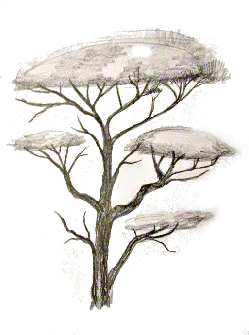 513x690 How To Draw A Tree