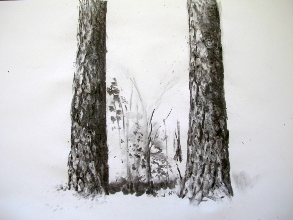 1000x750 Drawing The Uniqueness Of Pine Trees