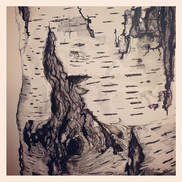 612x612 Oak Bark Drawing