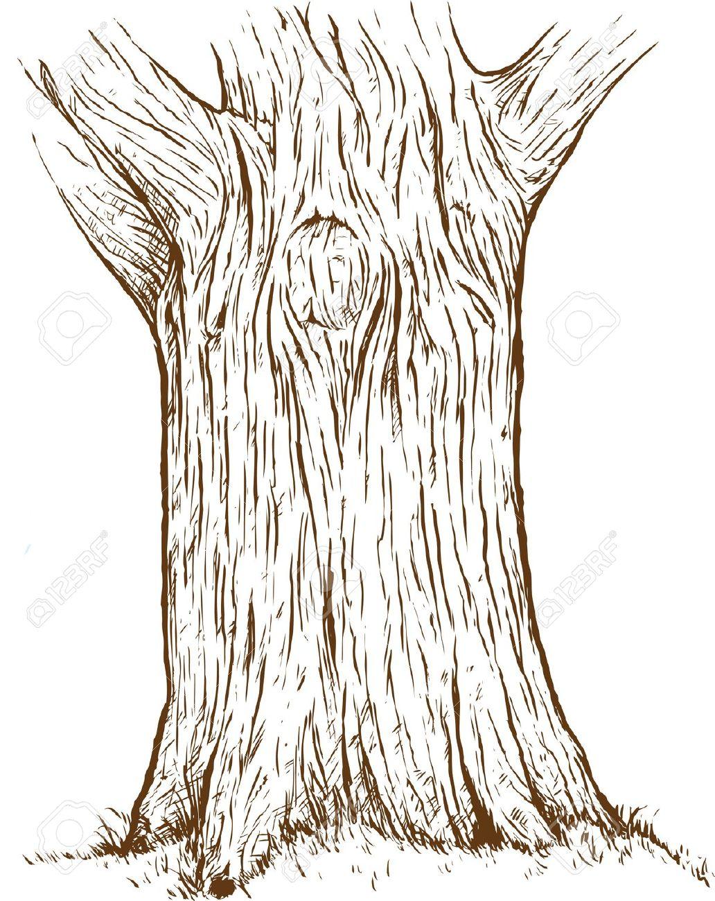 1032x1300 Tree Trunk Drawing