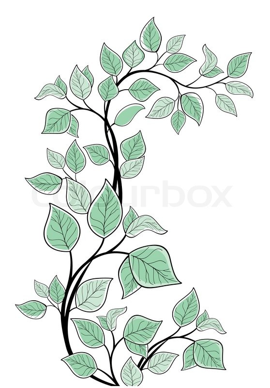 558x800 Vector Drawing Of The Tree Branch
