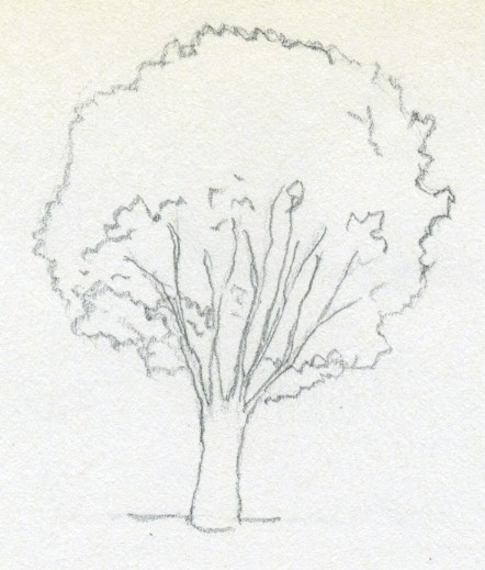 442x519 draw a tree simply and easily