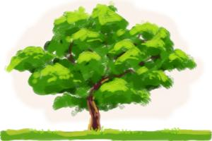 300x200 How To Draw An Oak Tree