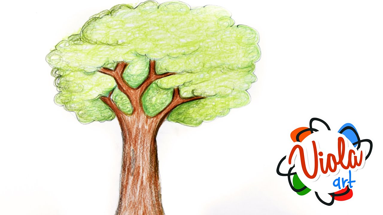 1280x720 How To Draw A Tree Pencil Color Drawing Tutorial For Kids Narrated