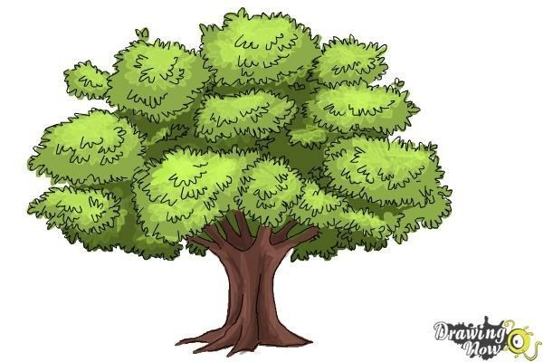 600x400 Tree Drawing With Color Simple Living Tree In The World Places