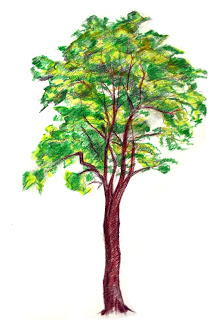 214x320 Dobby's Drawing Blog Tree Skecth
