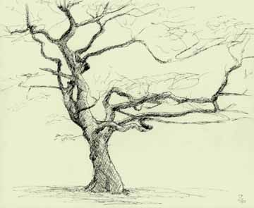 360x295 Grasmere Tree Branches) Trees Are Very Appealing They Vary