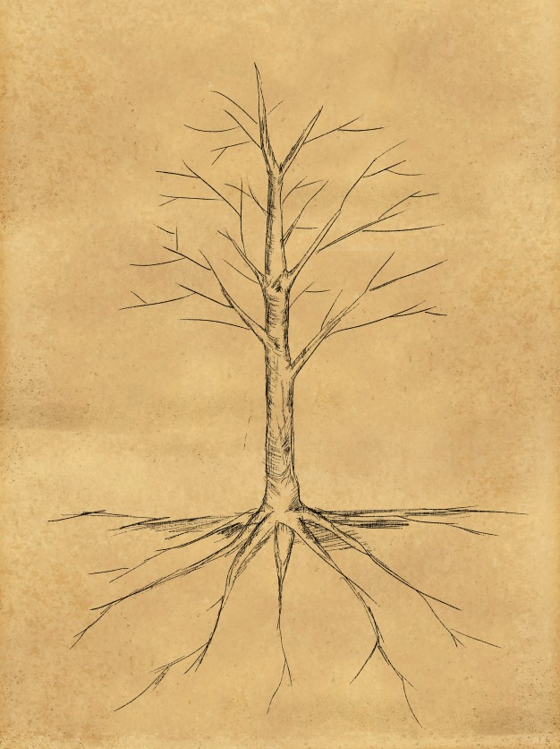626x836 Tree Sketch No Leaves Root On Paper Photo Free Download