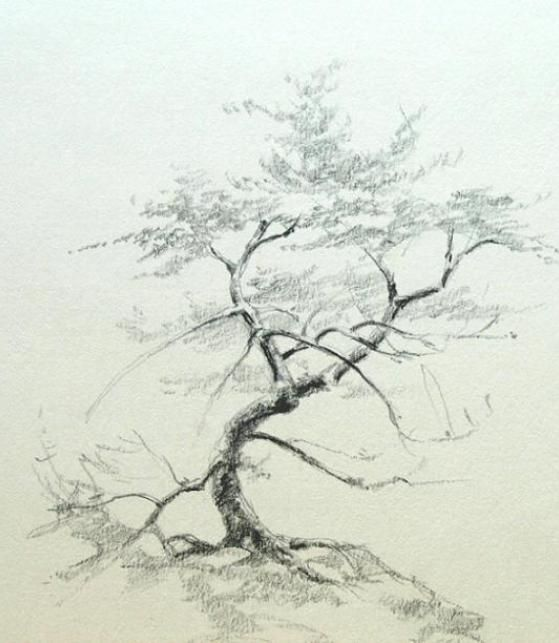 559x643 53 Best Drawing Ideas 2 Images On Drawing Trees