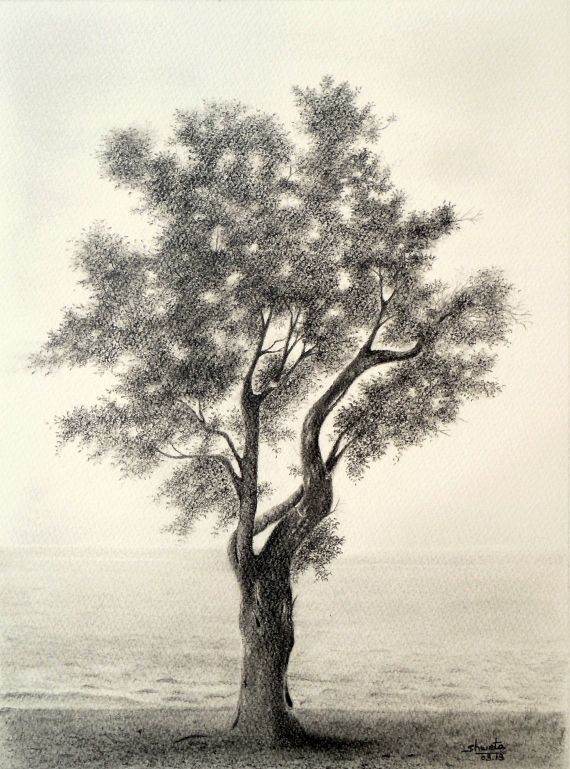 570x769 Olive Tree Pencil Drawing Pencil Art, Paintings And Artist