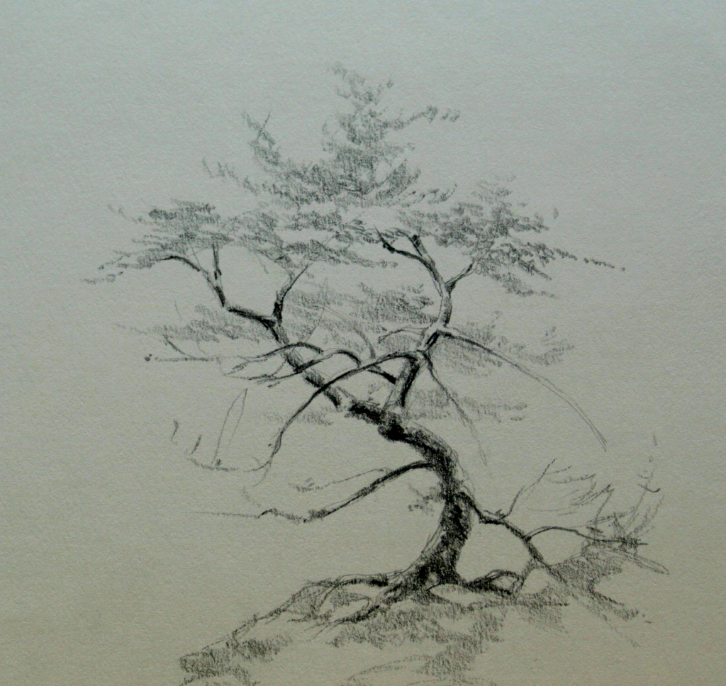 1024x968 Pencil Sketch Drawing On Tree Pencil Drawing Trees Pencil Tree
